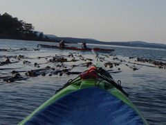 Kayaking - San Juan Islands 324